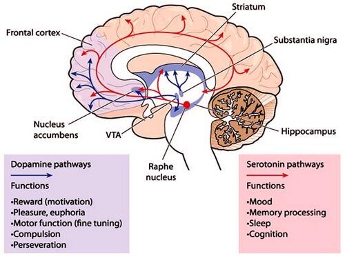 social ci hanno reso infelici percorso dopamina cervello Nicola Onida Facile Web Marketing